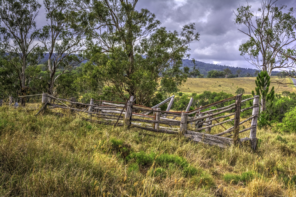 Australian Landscape-cattle race Qld
